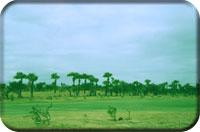 Bagan Golf Resort picture 3